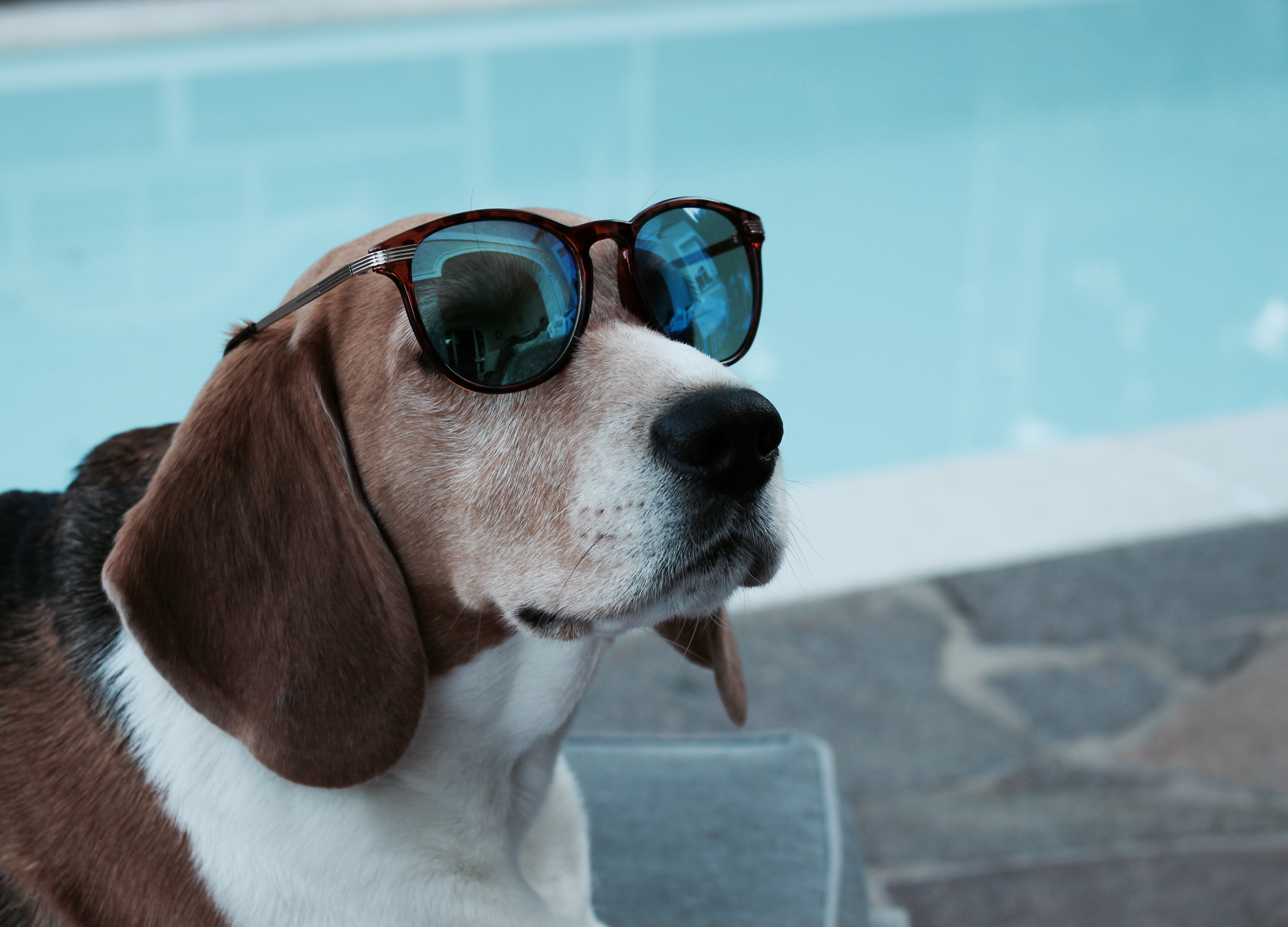 Welche Sonnenbrille passt mir?